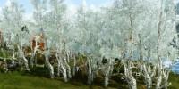 アーキエイジの最高の木はどれ?すべての木についてまとめてみた