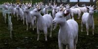 アーキエイジにおける安定した固定収入、畜産業